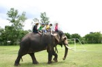 小さな象使いに乗せて貰ったよ!
