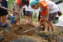 みんなで協力して木を植えます