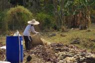 落ち葉堆肥上に運びます